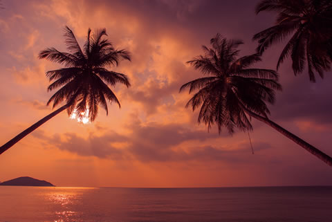 Taling Ngam beach, Koh Samui at sunset with palm trees